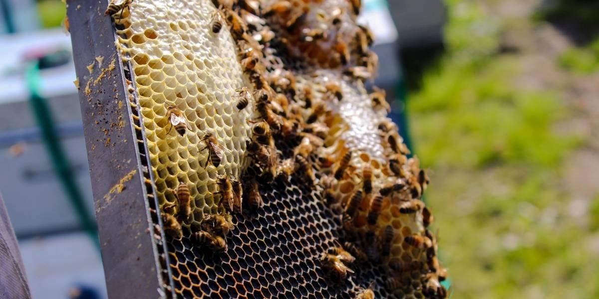 Suman y restan: las abejas pueden hacer matemáticas básicas, según estudio