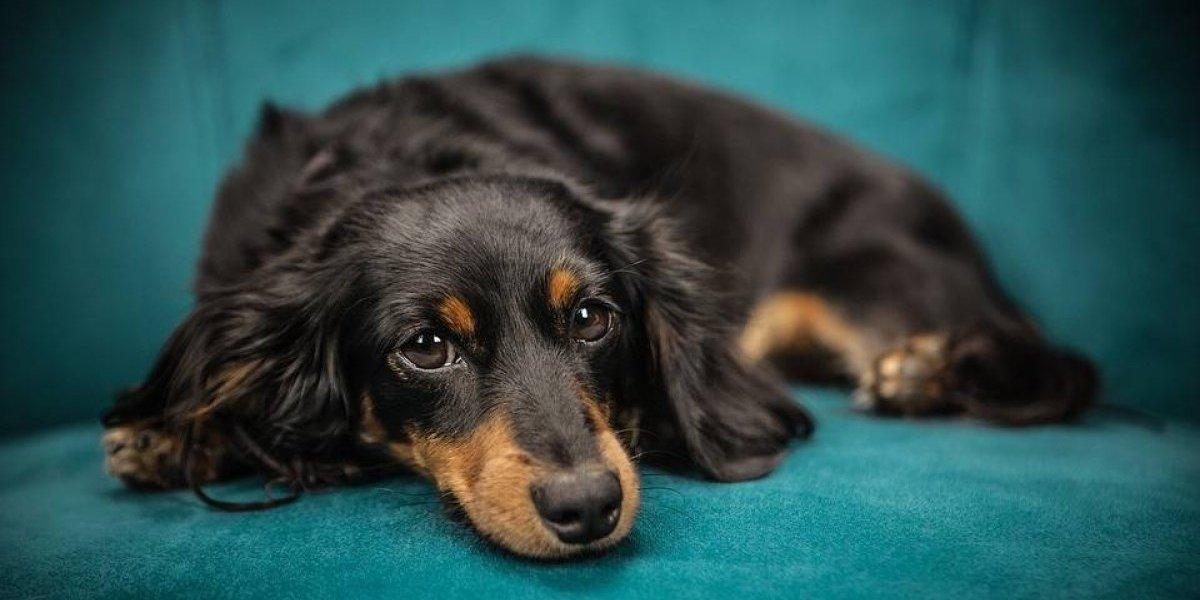 Veterinário revela o que os cachorros sentem antes de morrer e história causa comoção nas redes sociais