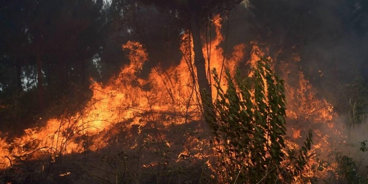 Alerta roja en Ñuble: incendio forestal en Nueva Aldea y autoridades no descartan intencionalidad