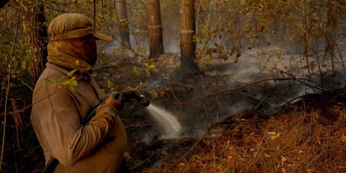 40 mil hectáreas quemadas por incendios forestales: 50% más que el verano anterior