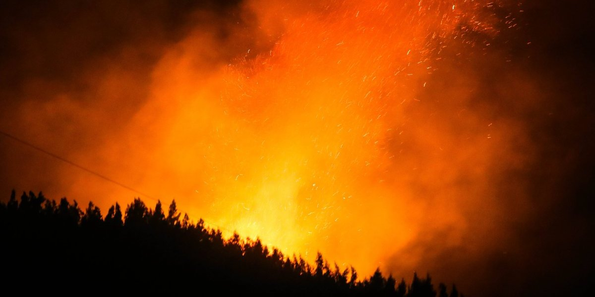 El sur al límite: los bosques se visten de fuego, ¿por culpa de los pirómanos e incendiarios?