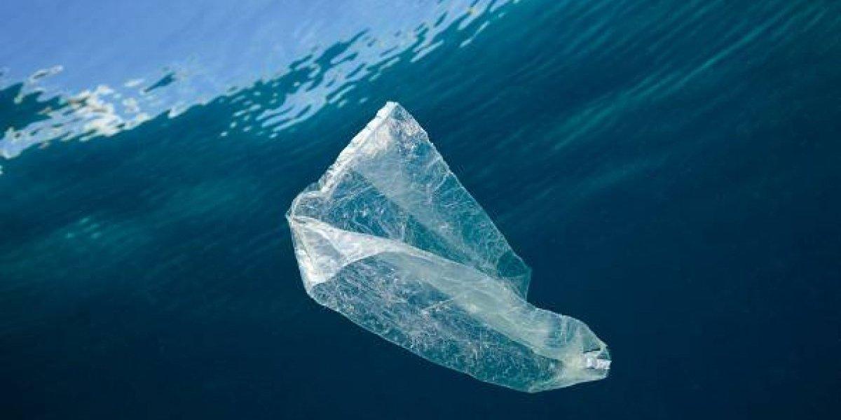 """""""El ser humano es el cáncer del mundo"""": surfista obtiene dramático registro de la contaminación por plástico en los océanos"""