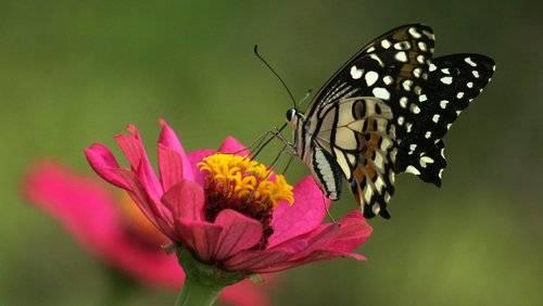 Ecología insectos