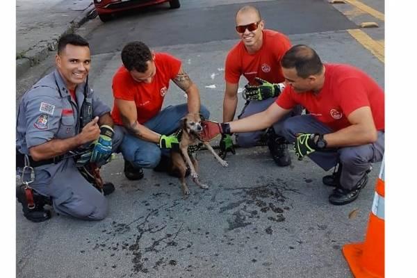 bombeiros salvam cachorrinha