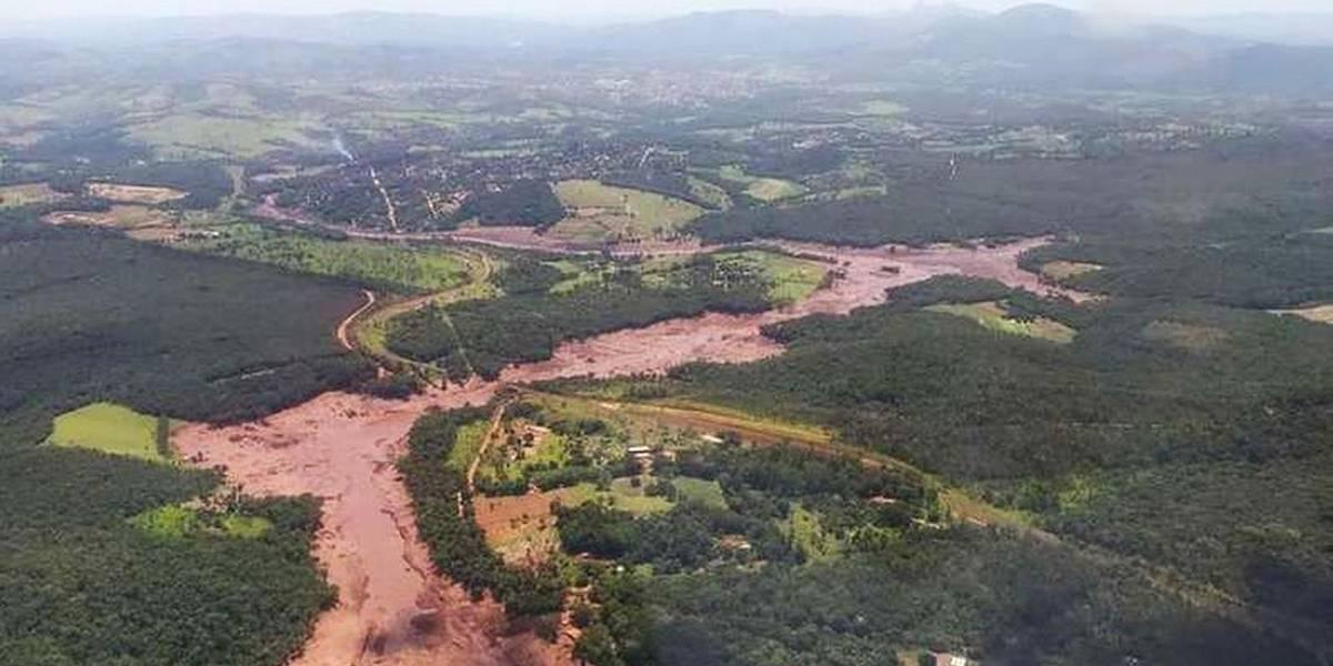 Ações de reflorestamento ainda dão os primeiros passos em Brumadinho