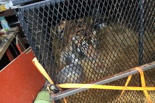 tigre casa houston