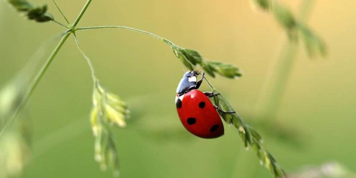 Ecología: Más de la mitad de las especies de insectos podrían desaparecer