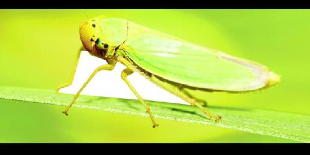 Los insectos están desapareciendo de la Tierra
