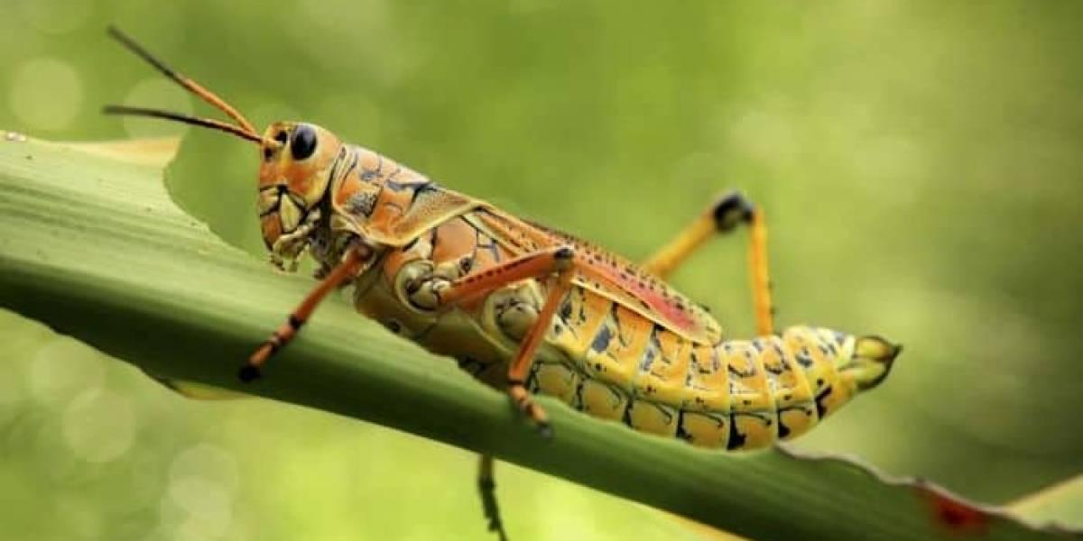 """Insectos robots: conoce los dispositivos que alguna vez fueron usados para """"espiar"""""""