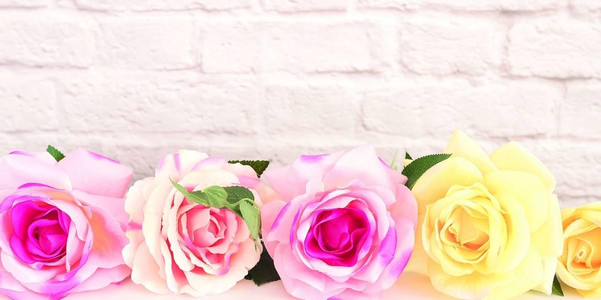 Qué flor regalar  de acuerdo a su significado