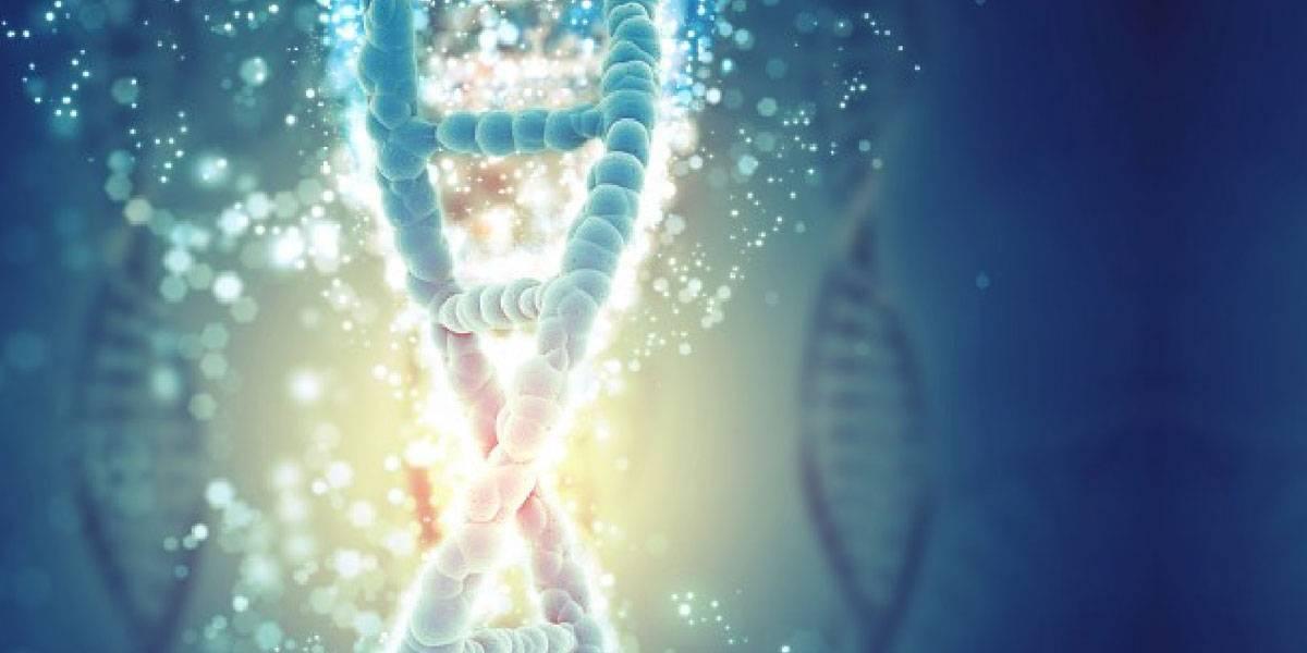 Científicos encuentran patrón universal que explica la duración de la vida en cada especie