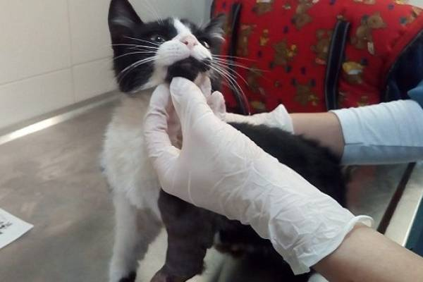 Así se salvó Oliver, un gatito que había quedado atrapado en el motor de un carro en Bogotá