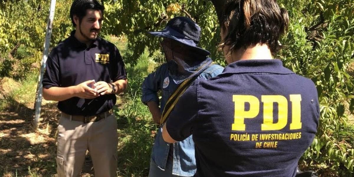PDI detectó a 19 extranjeros trabajando ilegalmente en fundo de Malloa