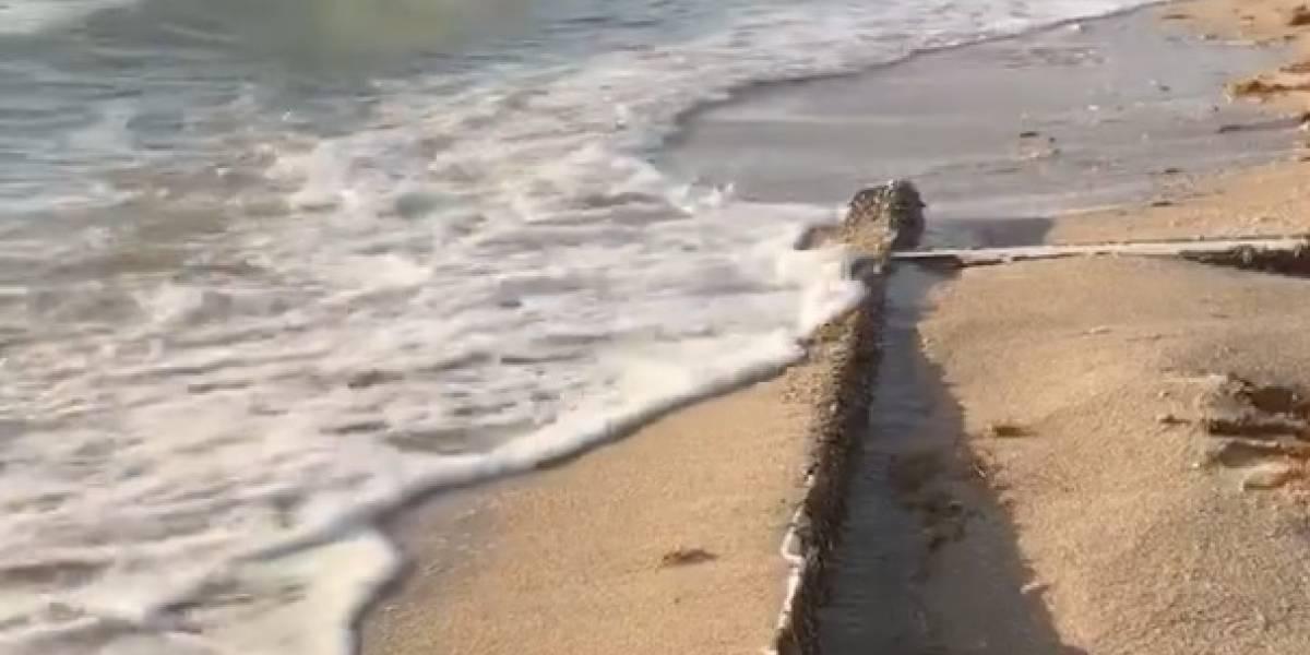 Video: El símbolo religioso que fue hallado en una playa y genera confusión en redes sociales