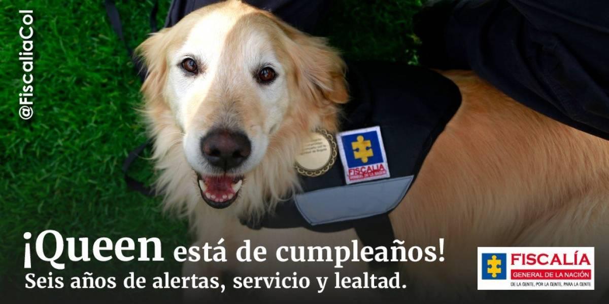 Así celebra la Fiscalía el cumpleaños de Queen, uno de sus miembros caninos