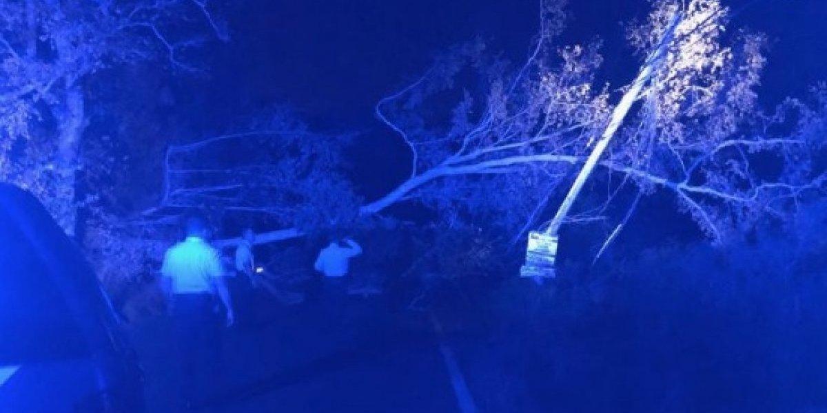Reabren carretera obstruida por árbol caído en Coamo