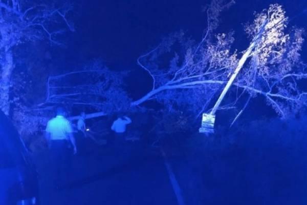 Carretera obstruida por árbol caído en Coamo