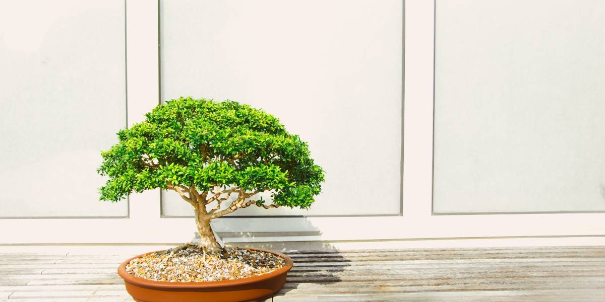 """""""Son como nuestros hijos"""": roban bonsáis a una pareja japonesa, y estos publican en Facebook instrucciones de cuidado para los ladrones"""