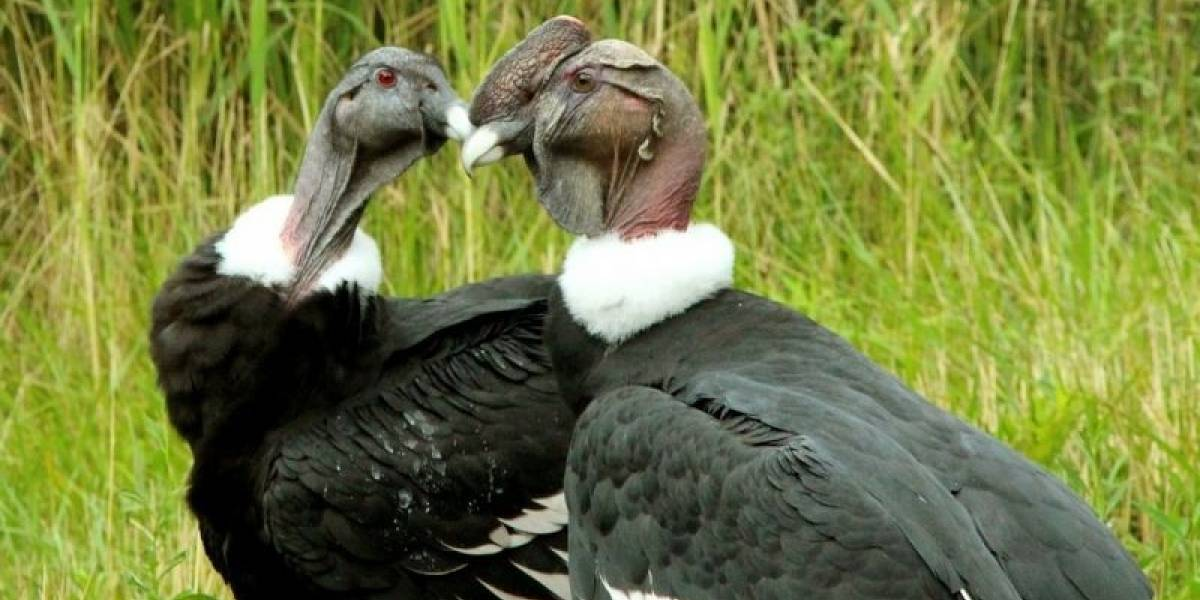 ¡Qué tierno! Estos cinco animalitos chilenos no pueden vivir sin su pareja