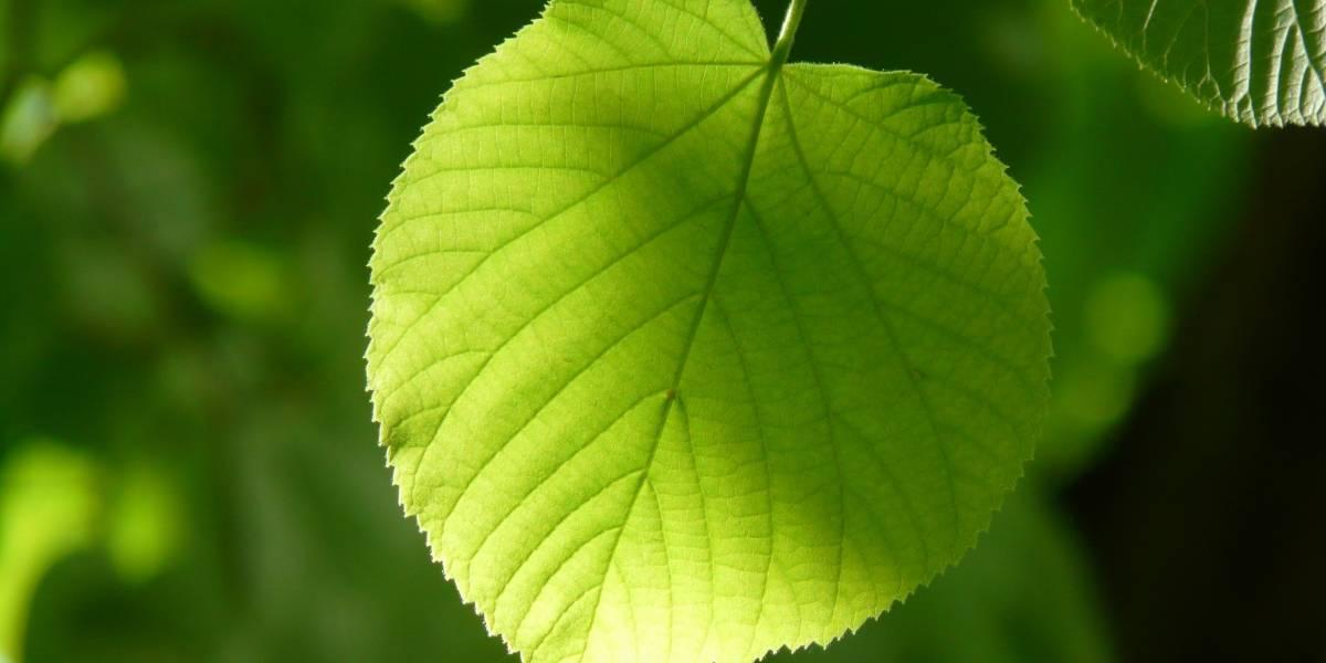 Desarrollan hojas artificiales que convierten el CO2 del aire en combustible