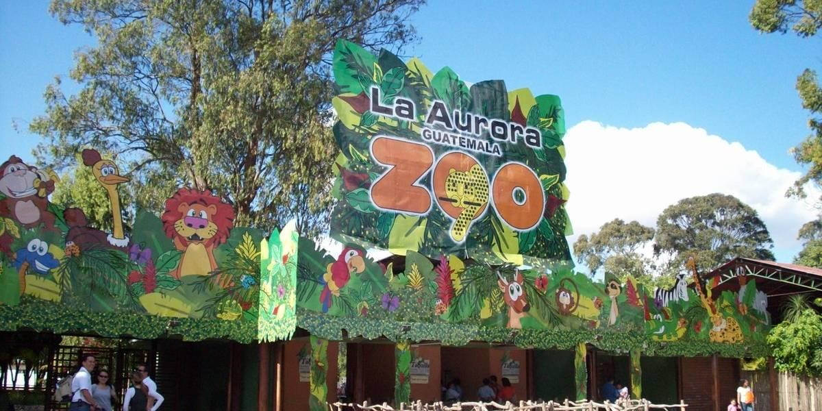 Zoológico La Aurora agradece apoyo de personas que han ofrecido aportes