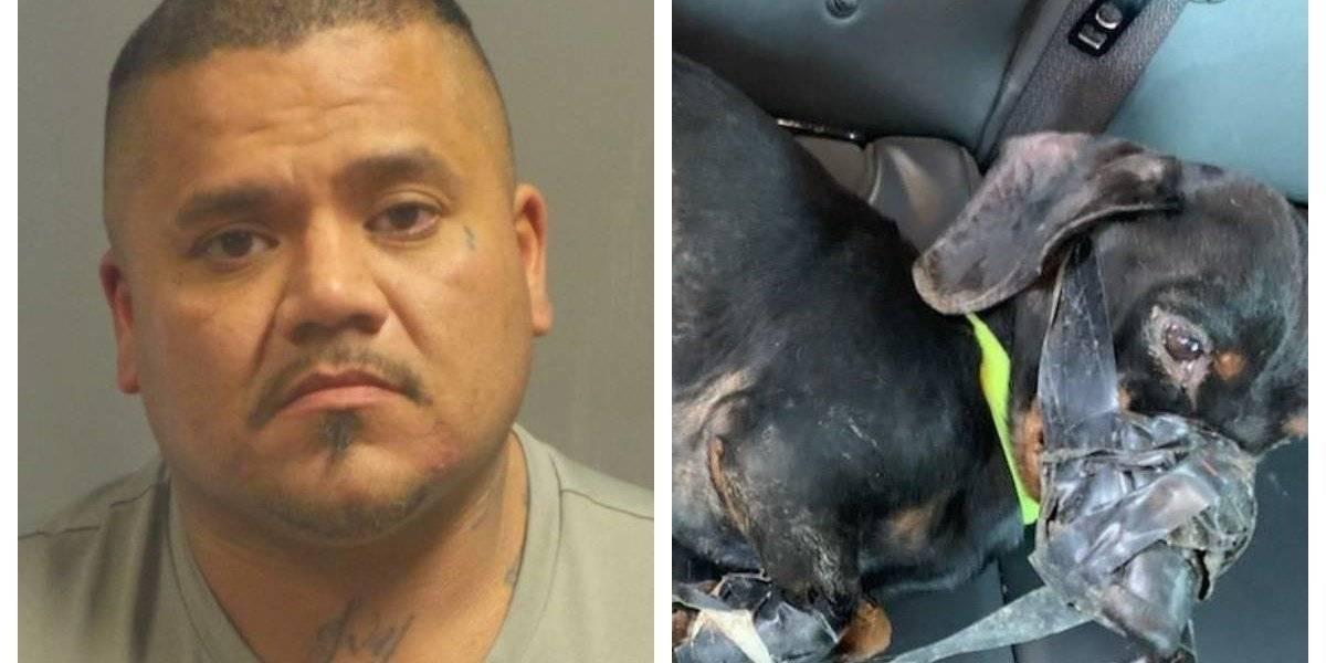 En un caso extremo de maltrato animal hombre amarró y lanzó a su perro por la ventana del auto para que muriera congelado