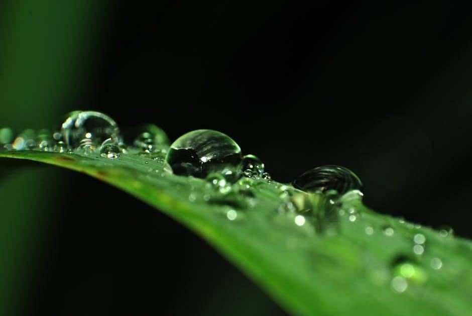 Beneficios del Aloe Vera para combatir la disfunción eréctil