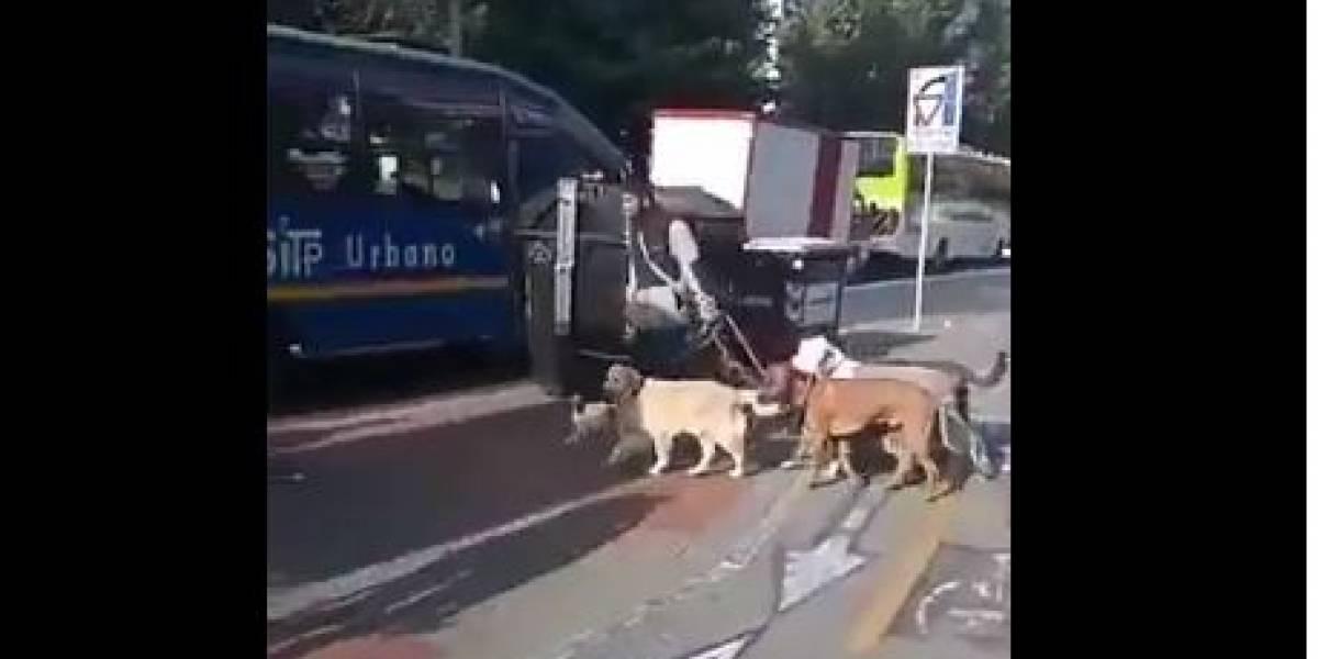 Denuncian a supuesto agresivo paseador de perros en Bogotá