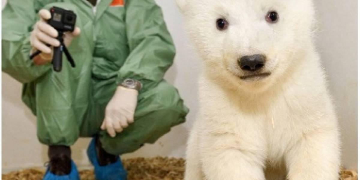 Fotos: Un osito polar recién nacido sale de su primer examen médico