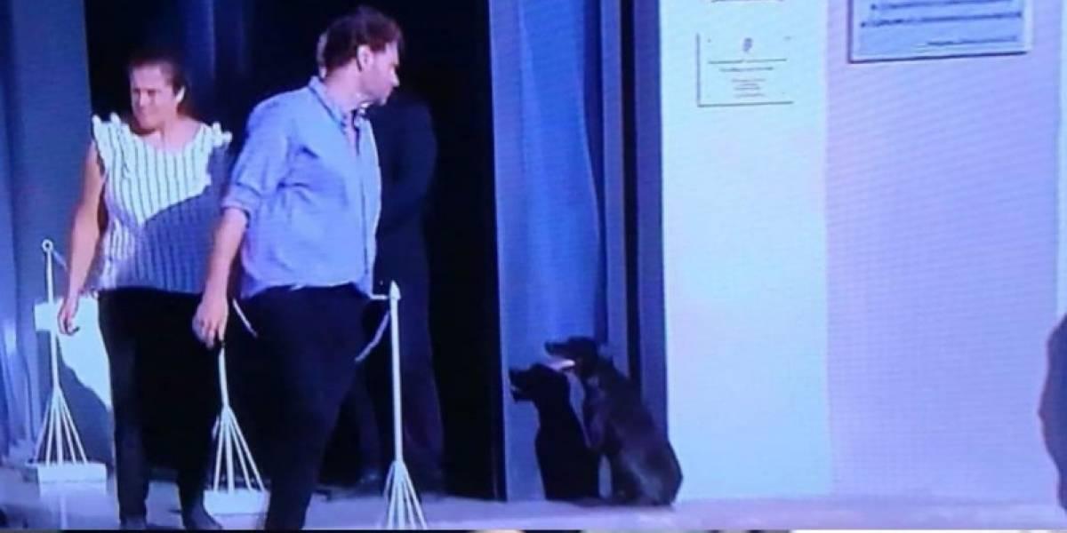Nala, la perrita de Emiliano Sala lo seguía esperando en su funeral