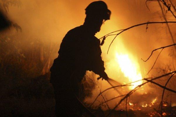 Brigadistas de la Conaf iniciaron huelga por precarias condiciones laborales