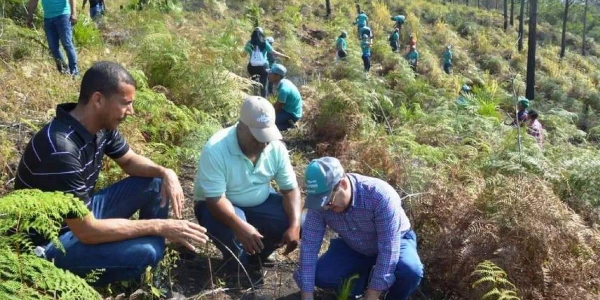 EDENORTE realiza reforestación zona de Loma Guaigüi