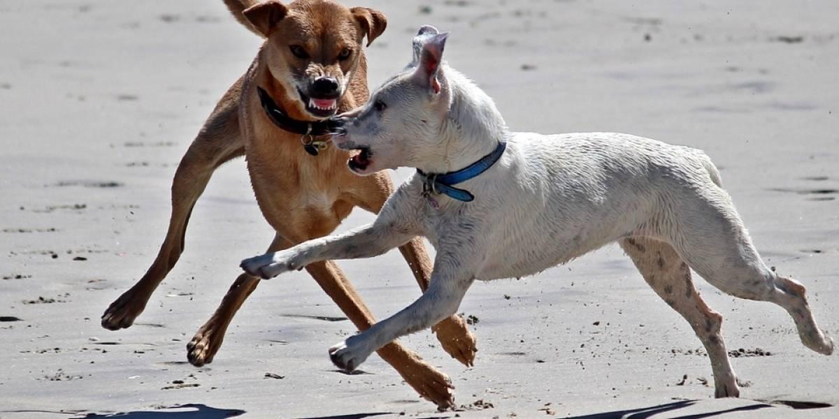 ¿Qué hacer si un perro me ataca a mi o a mi mascota?
