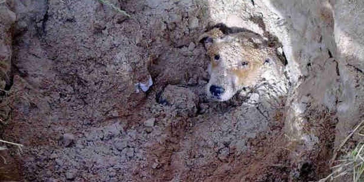 En un aterrador caso de maltrato animal, hombre enterró viva a su perrita porque la consideró una molestia
