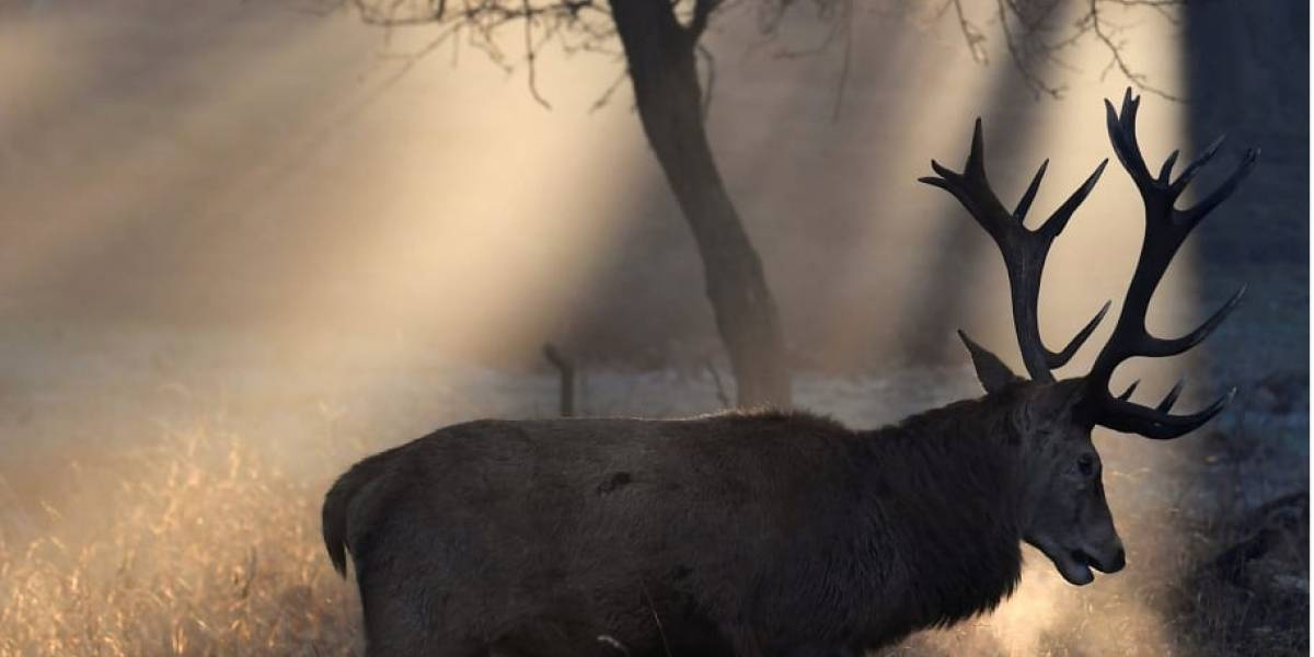 VÍDEO: Doença dos 'cervos zumbis' continua afetando EUA e preocupa autoridades