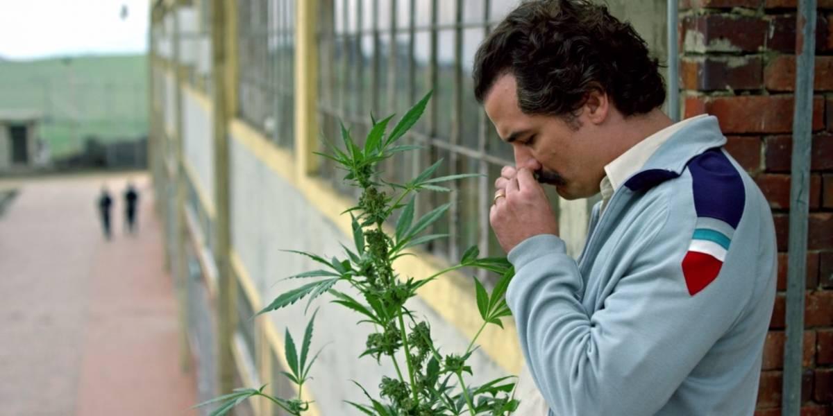 A más leyes restrictivas, mayor consumo de marihuana según estudio