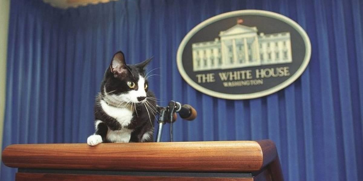 Socks, el gato fallecido de Bill Clinton