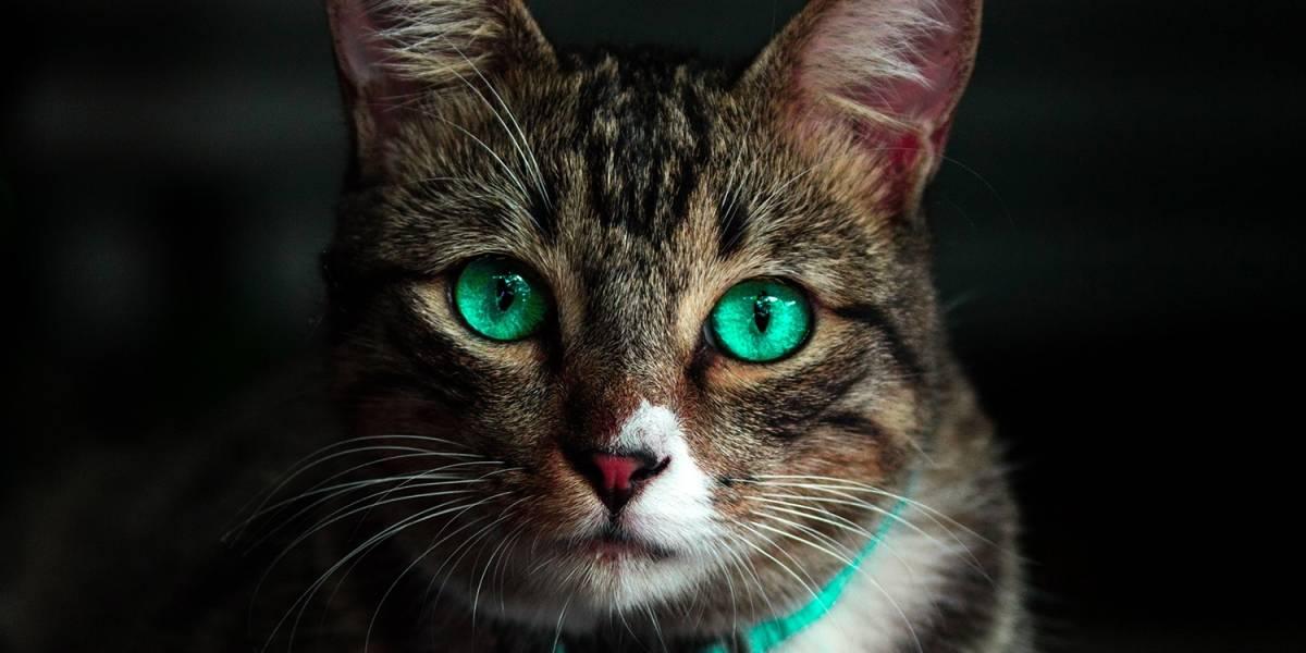 El poder curativo de los gatos
