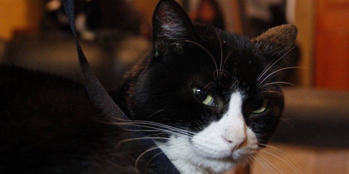 En el Día Mundial del Gato: estas son las mejores cuentas de felinos que debes seguir en Instagram