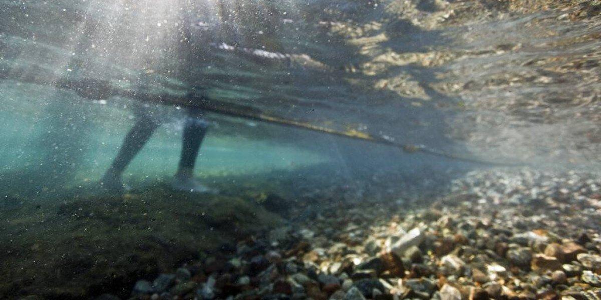 Corales del Mar Rojo podrían sobrevivir a futuro más cálido
