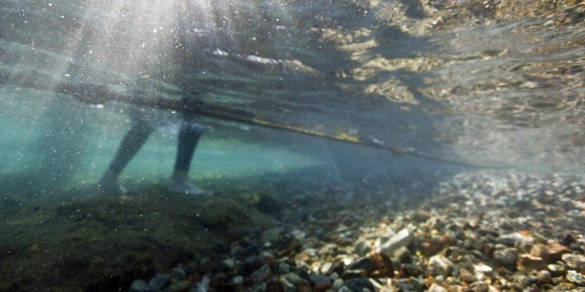 Un rayo de esperanza en medio de la crisis: descubren criatura marina con la clave para sobrevivir a los devastadores efectos del calentamiento global
