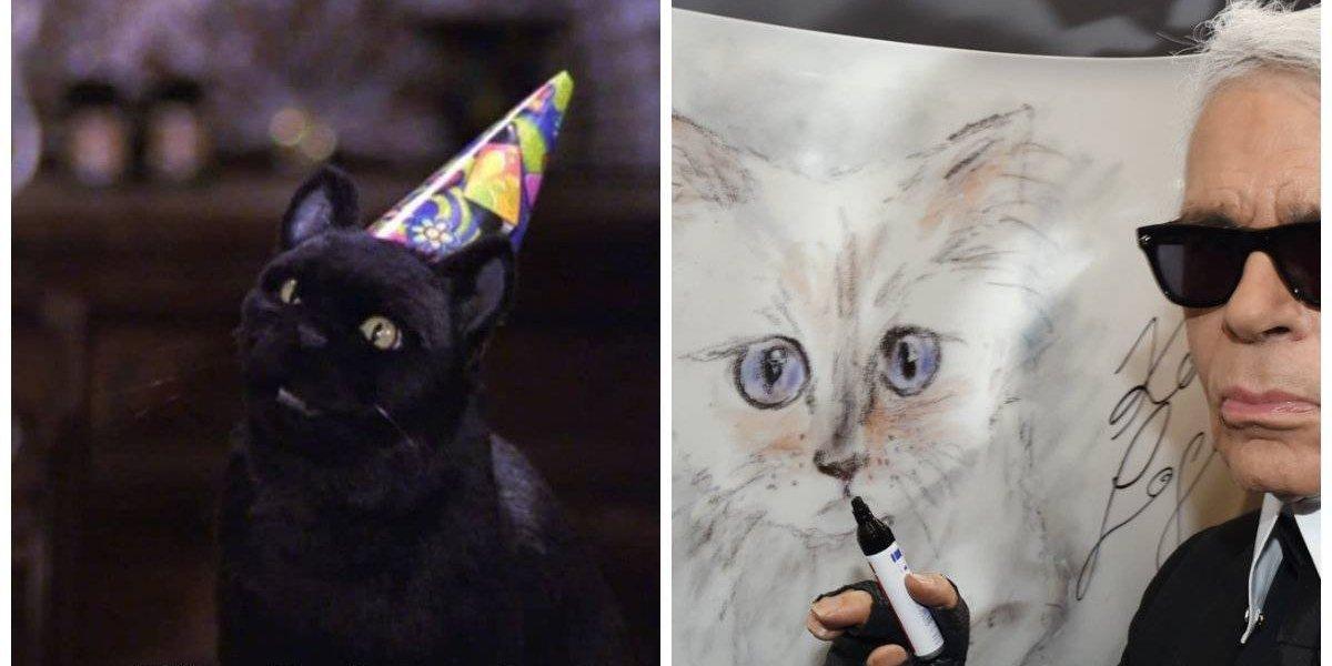 Gatos famosos, los mininos que roban cámara