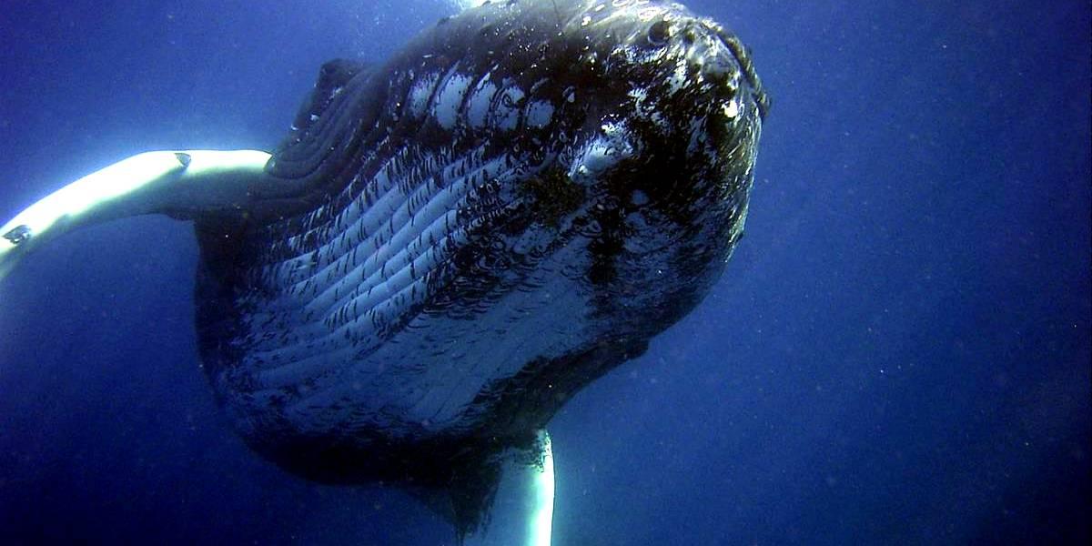 Localizan ballena muerta con 40 kg de plástico en su estómago
