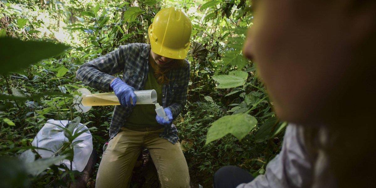 Huracanes crean laboratorios de cambio climático en Puerto Rico