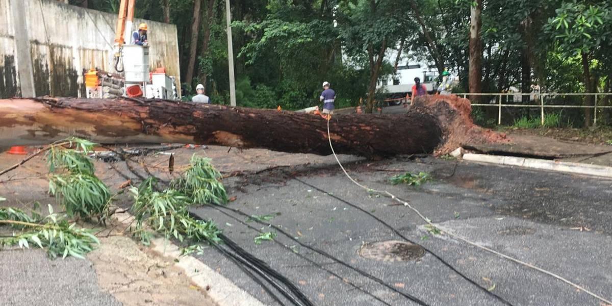 VÍDEO: Árvore cai em carro com família no estacionamento de restaurante