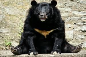 21 de febrero, Día Internacional de la preservación de los osos