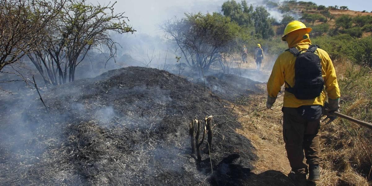 Incendio forestal afecta amplio sector en las cercanías del Centro Nuclear de Lo Prado