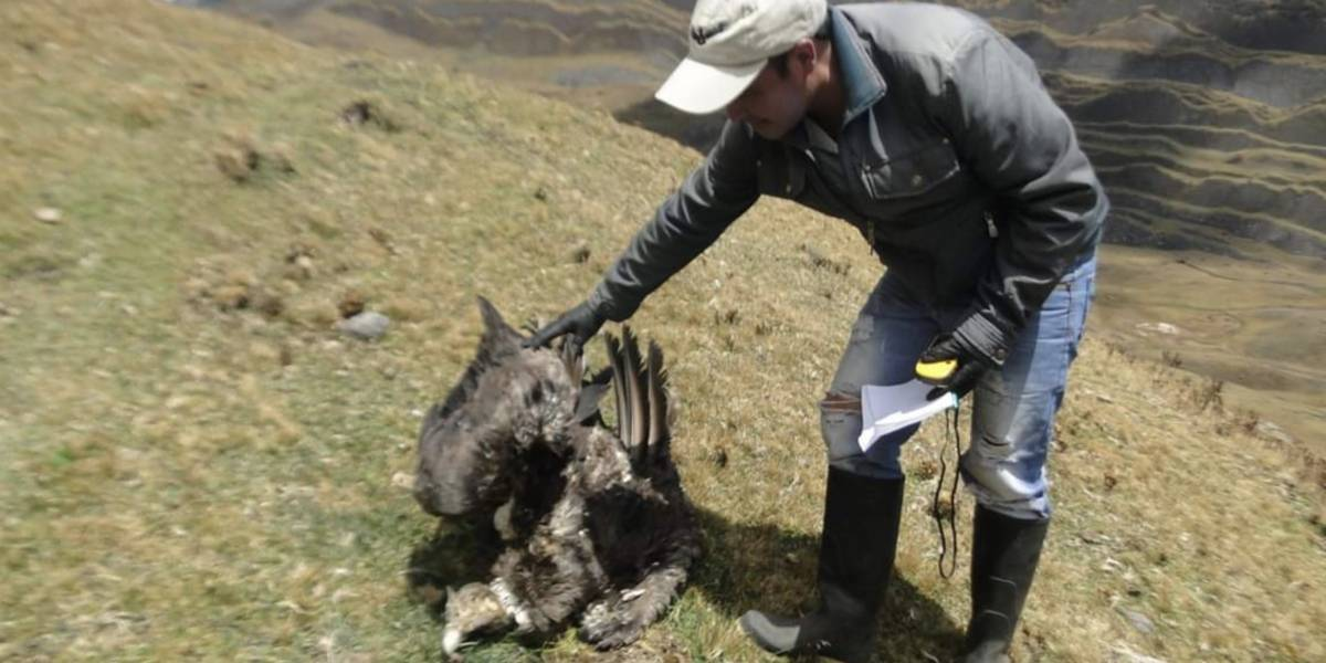 Hallan muerto a cóndor andino en Santander