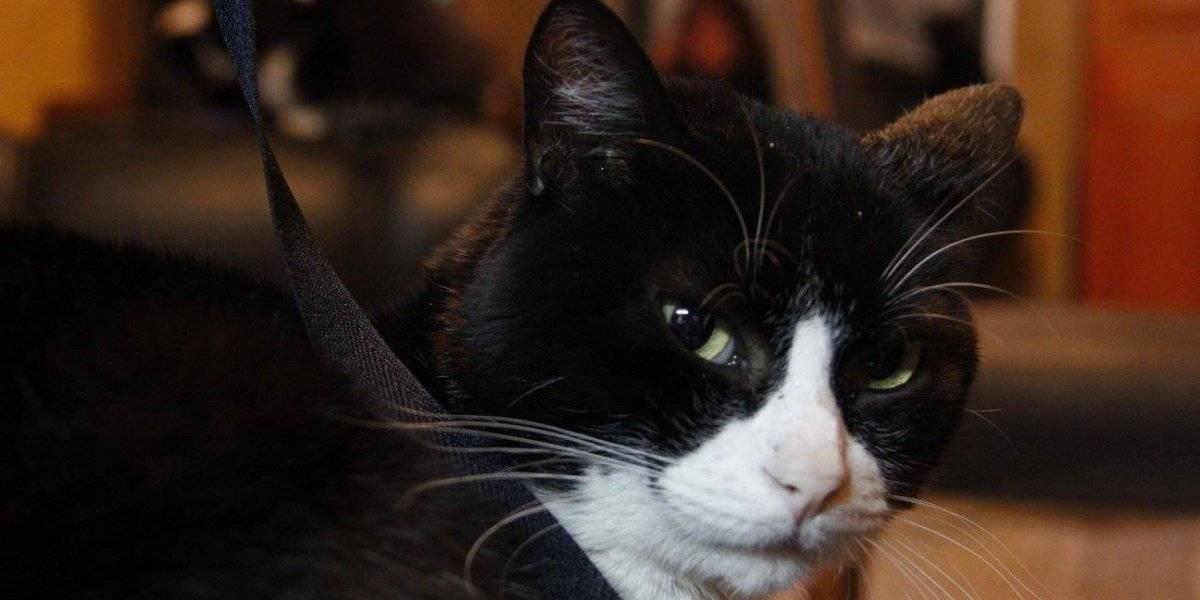 ¿Tienes un felino gruñón? Estudio asegura que los gatos tienden a imitar a sus dueños