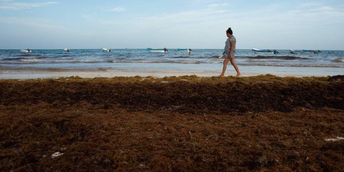 Marina prepara plan de emergencia contra el sargazo: AMLO